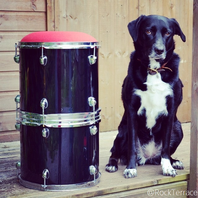 Rock Terrace Drum stool with black and white dog